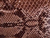 коричневая текстура кожи сумматора Стоковое Фото