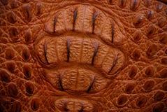 коричневая текстура крокодила Стоковое Фото