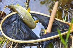 коричневая форель сети посадки рыболовства Стоковые Изображения