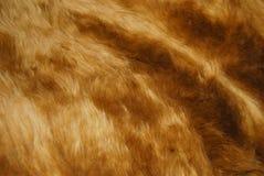 коричневая шерсть Стоковая Фотография