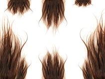 коричневейте волос стоковое фото rf