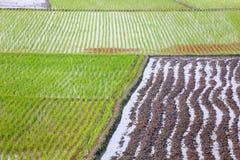 коричневейте культивируемый взгляд почвы земли furrows поля горизонтальный Стоковое фото RF