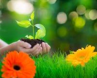 коричневейте покрытую землю дня относящое к окружающей среде листво идет идя зеленый вал текста лозунгов высказываний фраз природ Стоковые Фотографии RF