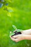 коричневейте покрытую землю дня относящое к окружающей среде листво идет идя зеленый вал текста лозунгов высказываний фраз природ Стоковое Изображение RF