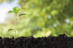 коричневейте покрытую землю дня относящое к окружающей среде листво идет идя зеленый вал текста лозунгов высказываний фраз природ Стоковое фото RF