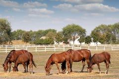коричневое место лошадей фермы Стоковые Фотографии RF