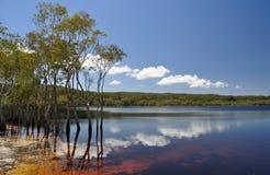 коричневое озеро Стоковые Фотографии RF