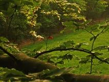 коричневое последнее разрешение Стоковые Фото