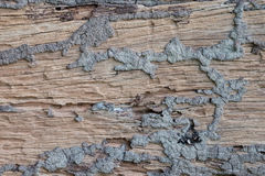 коричневое плотное строение вверх по древесине Стоковые Фотографии RF