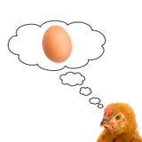 коричневое яичко имея думать курицы Стоковое фото RF