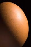 коричневое яичко крупного плана Стоковая Фотография