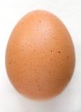 коричневое яичко Стоковое Фото