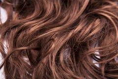 коричневые волосы Стоковое Изображение