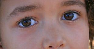 коричневые глаза Стоковая Фотография RF