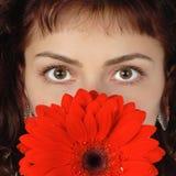 коричневые глаза Стоковое Изображение
