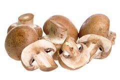 коричневые грибы швейцарские Стоковое Изображение