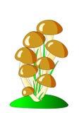 коричневые грибы Стоковая Фотография