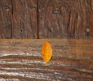Коричневые листья помещены на нескольких старых деревянных плит которые прикалываны с ногтями Стоковое Изображение RF