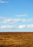 коричневые облака field желтый цвет Стоковая Фотография RF
