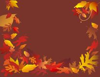 коричневые падая листья Стоковое Изображение