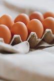 коричневые пасхальные яйца Стоковое Изображение RF