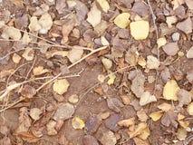 Коричневые цвета сушат текстуру предпосылки листьев Стоковое фото RF