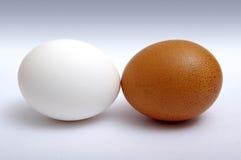 коричневые яичка белые Стоковое Изображение