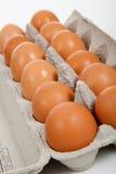 коричневые яичка коробки дюжины серые Стоковое Фото