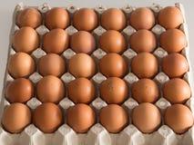 коричневые яичка цыпленка в коробке Стоковая Фотография RF