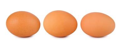 коричневые яичка 3 Стоковое Изображение