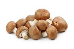 коричневые champignons Стоковое фото RF