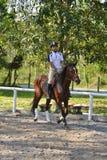 коричневый всадник лошади Стоковое фото RF