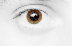 коричневый глаз Стоковые Изображения