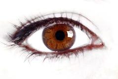 коричневый глаз Стоковые Фотографии RF