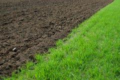 коричневый зеленый цвет поля Стоковое Изображение RF