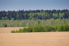 коричневый зеленый цвет пущи поля страны ближайше Стоковые Фото