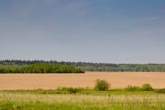 коричневый зеленый цвет пущи поля страны ближайше Стоковые Изображения