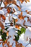 коричневый зеленый цвет Стоковые Фото
