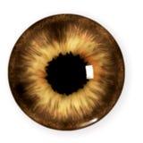 коричневый зрачок Стоковое Фото