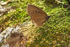 коричневый камень владением бабочки Стоковое Изображение