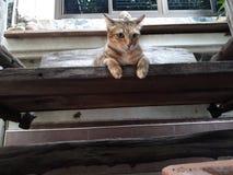 Коричневый кот сидит на старом деревянном поле, не смотря ничего стоковые изображения rf