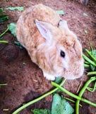коричневый милый кролик стоковая фотография rf
