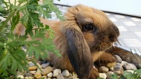 коричневый милый кролик Стоковые Изображения