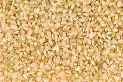 коричневый органический рис uncooked Стоковые Фото