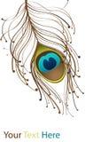 коричневый павлин пера Стоковые Изображения RF