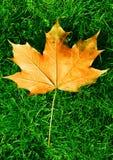 коричневый помеец листьев травы Стоковая Фотография RF
