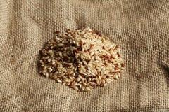 коричневый рис Стоковая Фотография
