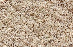 коричневый рис Стоковые Изображения
