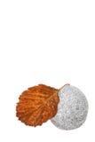 коричневый серый камень листьев Стоковые Фото