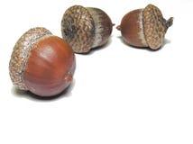 коричневый цвет жолудей Стоковые Изображения RF